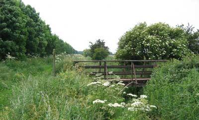 Local field views